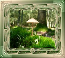 Les 9 – Mushroom