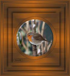 Les 10 – Little bird