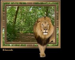 Les 14 - Lion