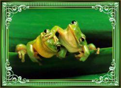 Les 17 – Froggies