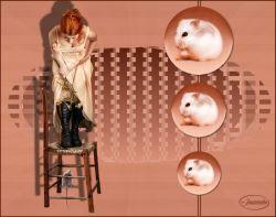 Les 81 – Bang voor de muis