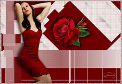 Les 127 – Rose