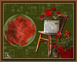 Les 179 - Rode Geraniums