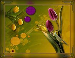 Les 195 - Tulpen